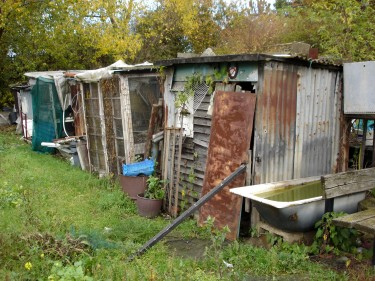 Sheds at London allotment: pic for allotment blog