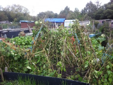 winds sweep our Yorkshire allotment