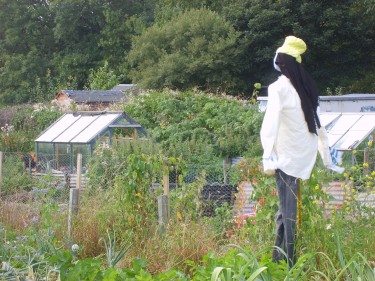 Rasta scarecrow on our Yorkshire allotment