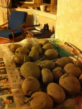 Gardening humour: chitting in the sitting room