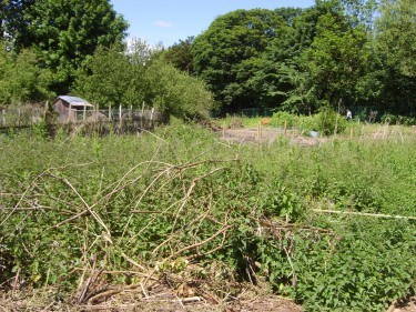 A view for novice allotmenteers