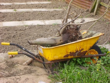 old wheelbarrow at our Yorkshire allotment