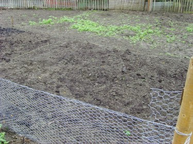 Newbie allotment holders clear their plot completely