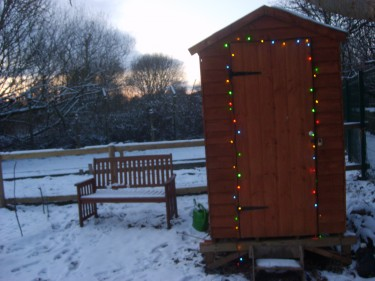 Allotment humour: shed decorated with fairy lights